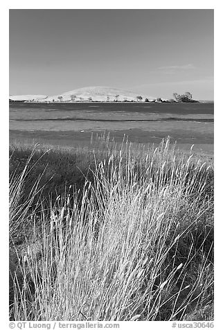 Summer grasses, Oneill Forebay, San Luis Reservoir State Recreation Area. California, USA (black and white)