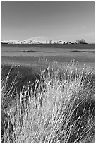 Summer grasses, Oneill Forebay, San Luis Reservoir State Recreation Area. California, USA ( black and white)