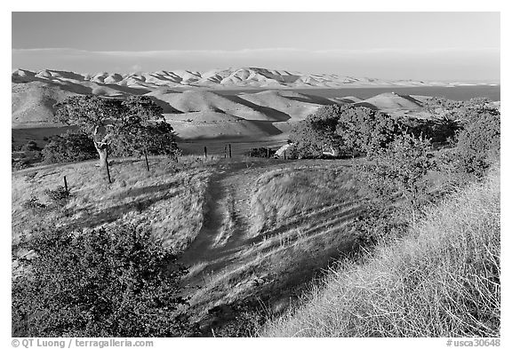 Rural path amongst oak and golden hills, San Luis Reservoir State Rec Area. California, USA (black and white)