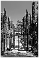 Gates in cypress trees in garden, Villa Montalvo. Saragota,  California, USA (black and white)
