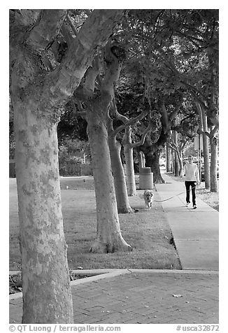 Woman walking her dog. Menlo Park,  California, USA (black and white)