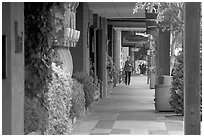 Shopping area of Santa Cruz avenue, the main downtown street. Menlo Park,  California, USA ( black and white)