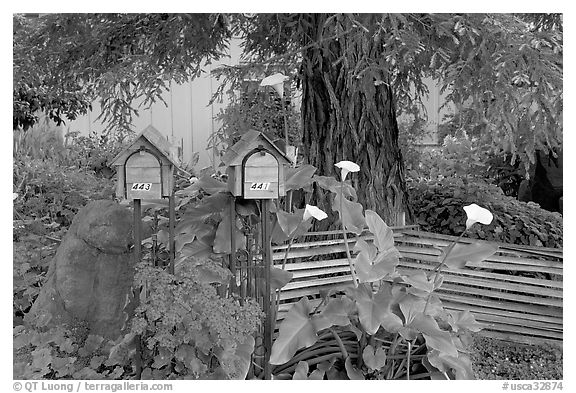 Mailboxes and front yard in a residential neighborhood. Menlo Park,  California, USA (black and white)