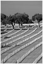 Fort Rosecrans National Cemetary, the third largest in the US. San Diego, California, USA ( black and white)