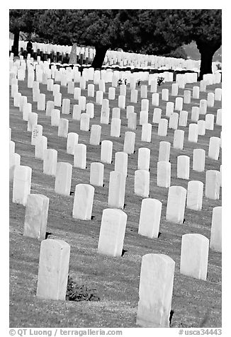 Gravestones and trees, Fort Rosecrans National Cemetary, Point Loma. San Diego, California, USA (black and white)