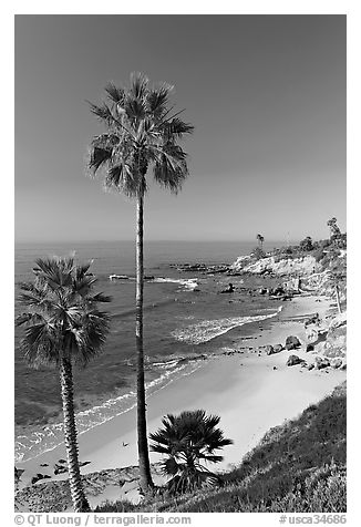 Black and white picture photo palm trees and rockpile beach laguna beach orange county california usa