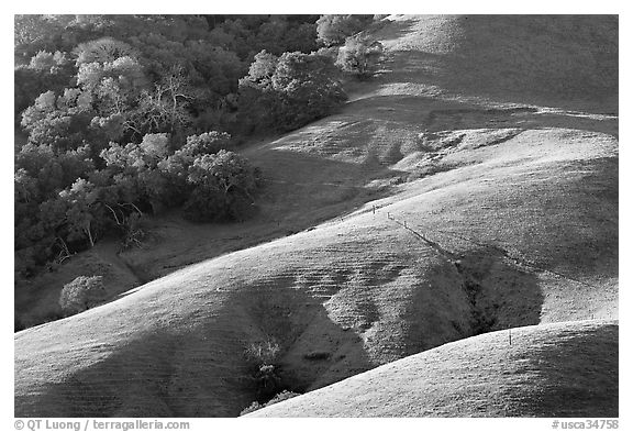 Hills and trees. Morro Bay, USA (black and white)