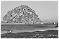 Yachts and Morro Rock. Morro Bay, USA (black and white)