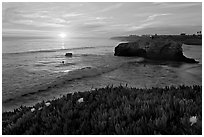 Iceplant and seastack, Natural Bridges State Park, sunset. Santa Cruz, California, USA (black and white)
