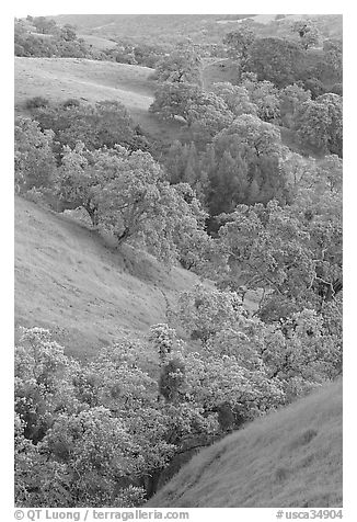 Oaks and hills in late spring. San Jose, California, USA (black and white)