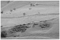 Hillside farmlands in spring, Mount Hamilton Range foothills. San Jose, California, USA (black and white)