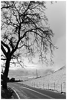 Mount Hamilton road winding on fresh snow covered hills. San Jose, California, USA ( black and white)