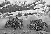 Two oaks and snowy hills, Joseph Grant Park. San Jose, California, USA (black and white)