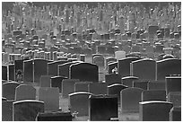 Headstones, Colma. California, USA (black and white)