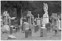 Variety of headstones, Colma. California, USA (black and white)