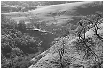 Bare oak  trees on hillside in early spring, Sunol Regional Park. California, USA (black and white)
