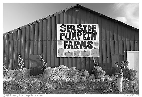 Woman checking out pumpkins in front of red barn. California, USA (black and white)