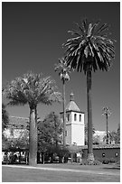 Palm trees and mission, Santa Clara University. Santa Clara,  California, USA (black and white)