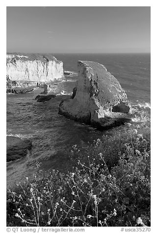 Flowers and rock island near Davenport. California, USA (black and white)