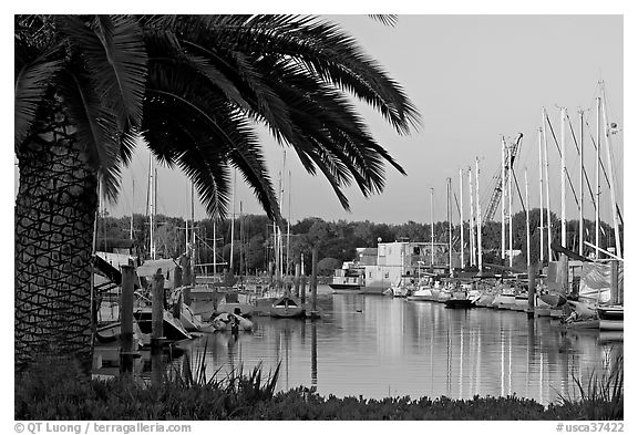 Palm tree and marina. Redwood City,  California, USA (black and white)