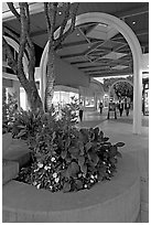 Flowers and arches, Stanford Shopping Mall, dusk. Stanford University, California, USA (black and white)