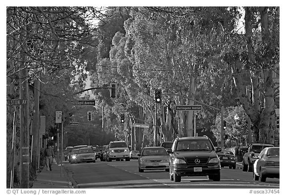 El Camino Real bordered by Eucalyptus trees. Burlingame,  California, USA