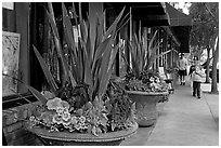 Flowers on Main Street, with family strolling by. Half Moon Bay, California, USA (black and white)