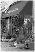 Art gallery decorated with large pumpkins. Half Moon Bay, California, USA (black and white)
