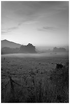 Pasture with fog at sunset. San Mateo County, California, USA ( black and white)