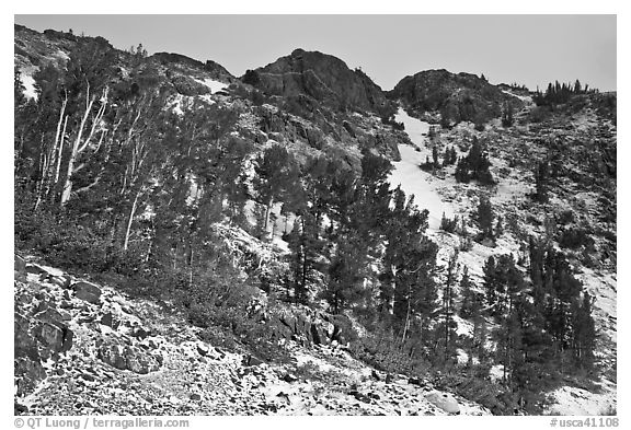 Trees and peaks with fresh snow. California, USA (black and white)