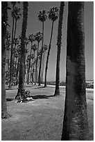 Man with bicycle laying on grass bellow beachside palm trees. Santa Barbara, California, USA (black and white)
