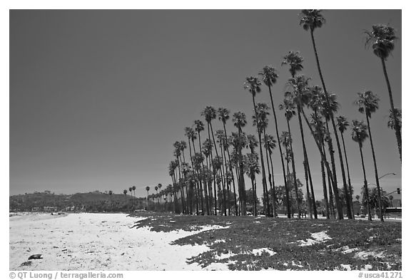 Black and white picture photo east beach and palm trees santa barbara california usa