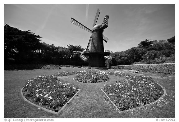 Spring flowers and old Dutch windmill, Golden Gate Park. San Francisco, California, USA (black and white)