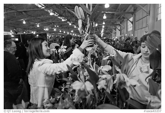 Woman buys orchid plant, Mason Center. San Francisco, California, USA (black and white)