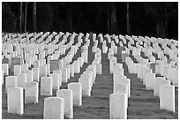Rows of headstones, San Francisco National Cemetery, Presidio. San Francisco, California, USA (black and white)