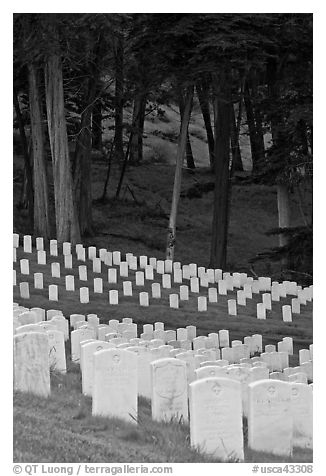 Headsones and forest, San Francisco National Cemetery, Presidio. San Francisco, California, USA (black and white)