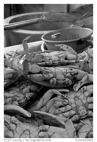 Close-up of crabs, Fishermans wharf. San Francisco, California, USA (black and white)