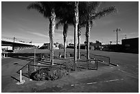 Tiniest park with grass and palm trees, Bergamot Station. Santa Monica, Los Angeles, California, USA ( black and white)