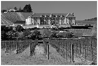 Vineyard and chateau style winery in spring. Napa Valley, California, USA ( black and white)