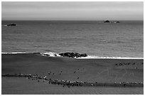Marine mammals on sand spit from above, Jenner. Sonoma Coast, California, USA ( black and white)