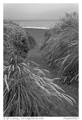 Path amongst dune grass and Ocean, Manchester State Park. California, USA (black and white)
