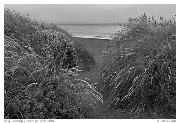 Dune grass and Ocean at dusk, Manchester State Park. California, USA (black and white)