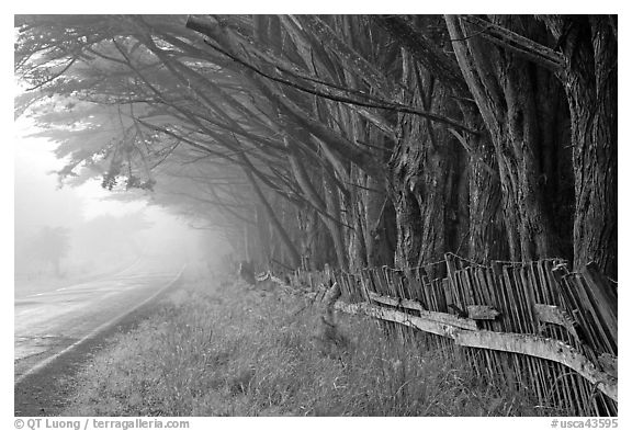 Fence, trees, and road in fog. California, USA