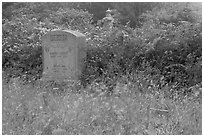 Headstone and wildflowers in fog, Manchester. California, USA ( black and white)
