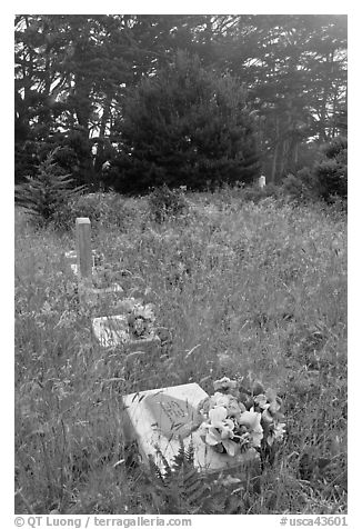 Graves in fog, Manchester. California, USA (black and white)