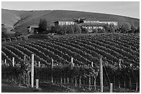Vineyard and winery in autumn. Napa Valley, California, USA (black and white)