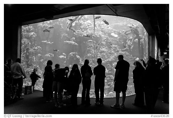 Tourists in front of large tank, Steinhart Aquarium, California Academy of Sciences. San Francisco, California, USA<p>terragalleria.com is not affiliated with the California Academy of Sciences</p>