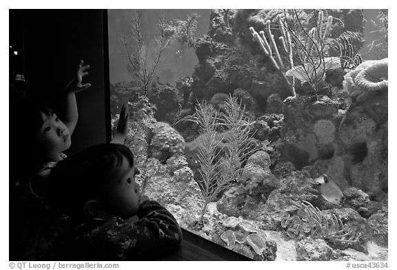 Children looking at aquarium, California Academy of Sciences. San Francisco, California, USA (black and white)