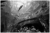 Tourists gaze upwards at flooded Amazon forest and huge catfish, California Academy of Sciences. San Francisco, California, USA<p>terragalleria.com is not affiliated with the California Academy of Sciences</p> (black and white)