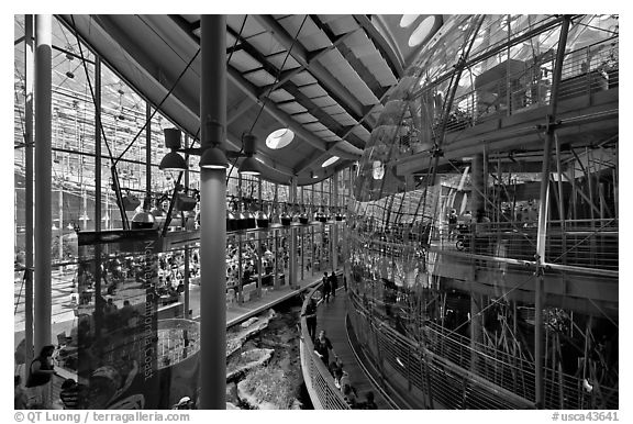 Piazza and glass dome enclosing rain forest , California Academy of Sciences. San Francisco, California, USA (black and white)